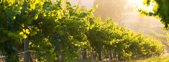 Hunter Valleys Treasure hunts explore wine tasting at Cellar Doors and discover secrets between the vines
